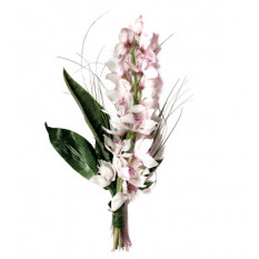 Branch of cimbidium (Medium)